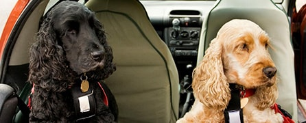tips for travelling in cars with dogs